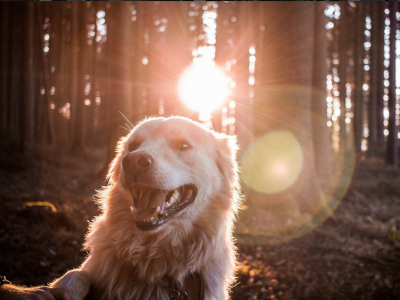 Dog in a sunny forest